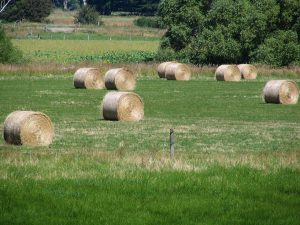 Hay_bales_near_Berwick,_Otago,_New_Zealand