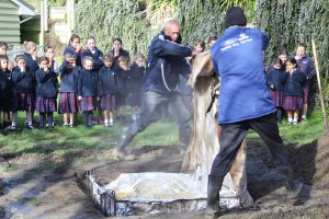 Biculturalism at St Anthony's School, Seatoun Archdiocese of Wellington