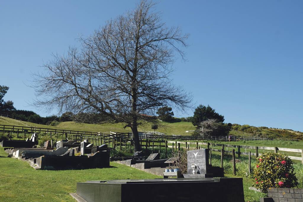 Te Tau o Hāto Hōhepa – The Year of St Joseph Archdiocese of Wellington